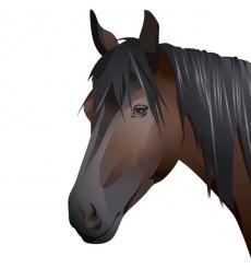 Sticker Tête de cheval réaliste