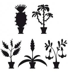 Sticker Plantes grasses
