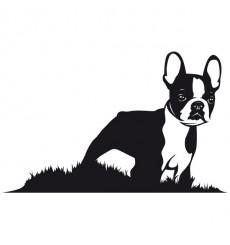 Sticker Boston terrier