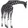 Sticker Girafe penchée - stickers animaux & stickers muraux - fanastick.com