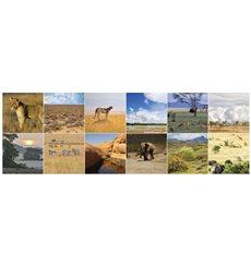 Sticker pour carrelage Flore et faune de l'Afrique