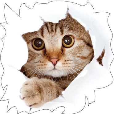 Sticker chat - stickers trompe l oeil & stickers muraux - fanastick.com